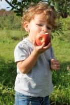 Eddy's Fruit Farm 2013