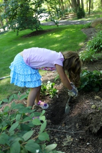 Planting our Ginger