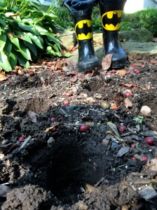 Batman Plants Bulbs