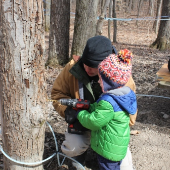 Drilling Sap Hole